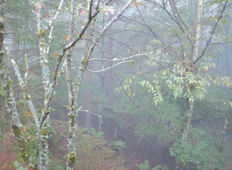 鹿のすむ森