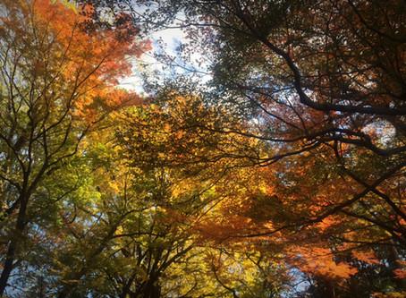 根津美術館庭園の紅葉