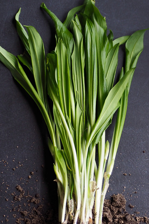 Green Garlic 1 bushell