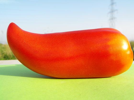 Tomate Corne des Andes