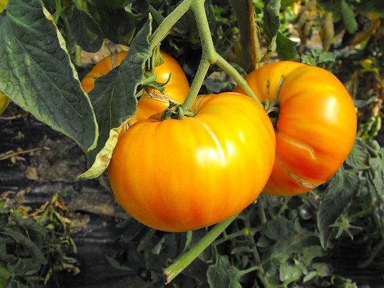 Tomate Ananas K
