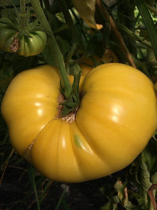 Tomate Géante jaune de Belgique