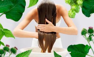 Лікування випадіння волосся фітотерапією - zborovik.com.ua
