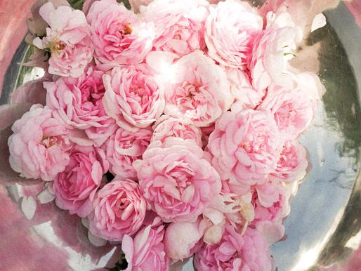 Трояндова вода, або гідролат – природний рецепт краси