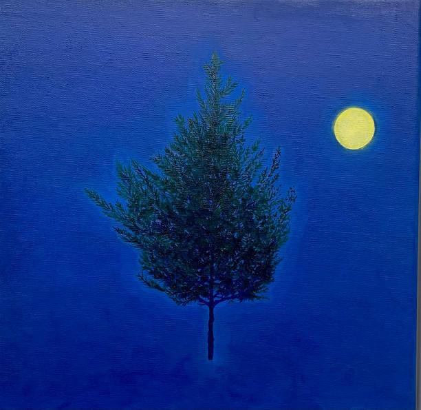 Tree-Nature Portrait (8)
