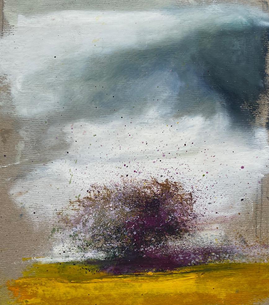'Provençal Plum'