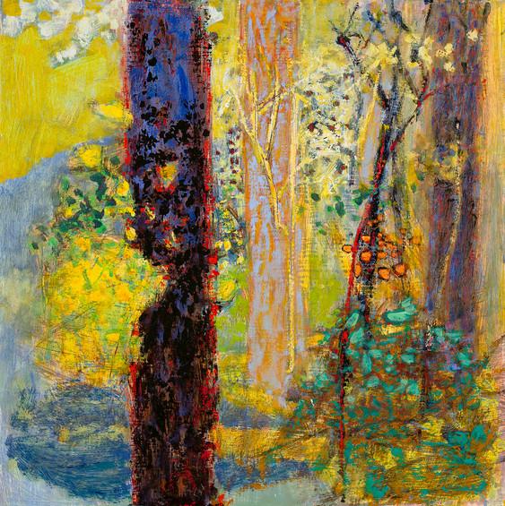 'Enchanted Spot'