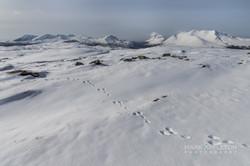 Torridon mountains