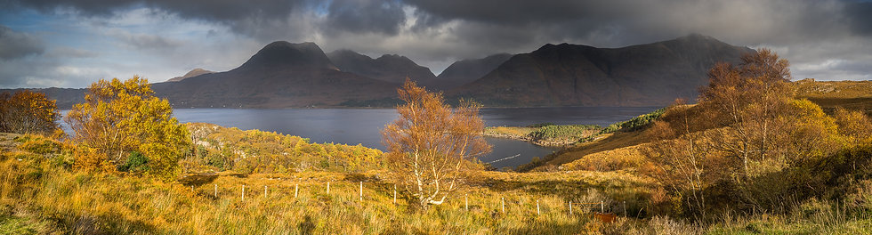 Tree catching the sunlight with moody Torridon mountains in the distance