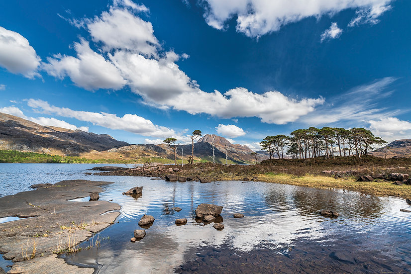 Scots Pines on the shores of Loch Maree