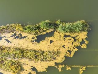 Drones para la creación de mapas de vegetación acuática.