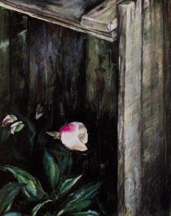 THE LAST FLOWERS FROM THE DARKNESS