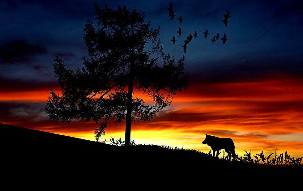 afterglow-animal-backlit-247583.jpg