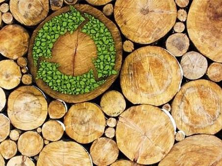 Você sabe o que é madeira de reflorestamento?