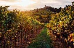vineyard-in-tuscany-5c298f19c9e77c0001f7