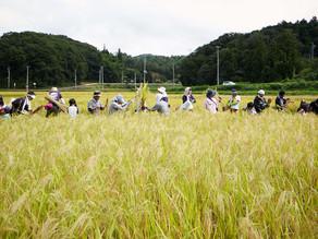 300年の歴史!自然栽培米に拘った仁井田本家