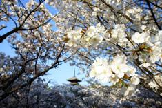 niwaji.jpg
