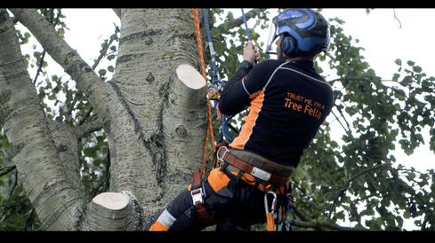 Tree Fellas Hull - Barrass Creative