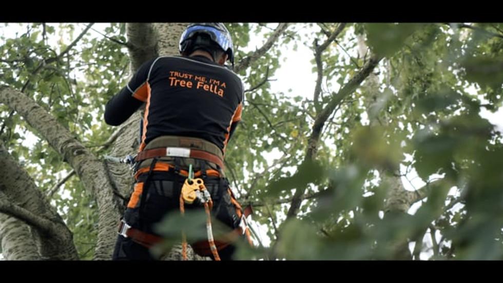 Tree Fellas Hull 2020