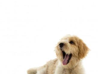 puppy-dog-isolated-white-background_1232