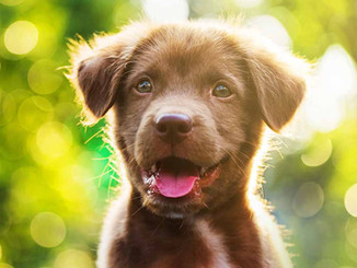 Cute-Dog-Names-HP-long.jpg