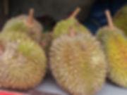 Durian Malaysia National Fruit