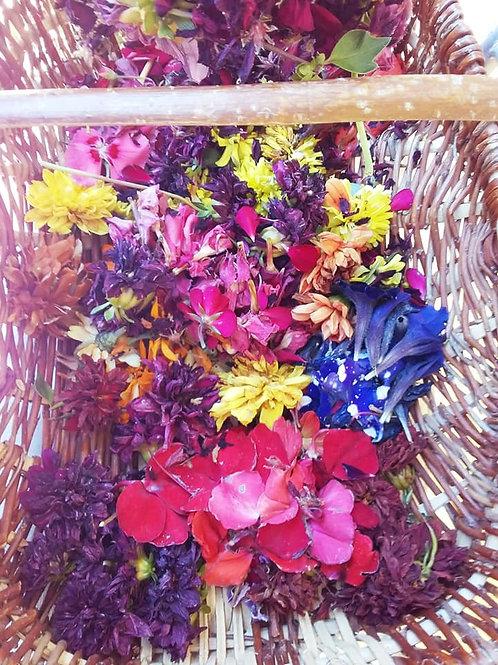 Atelier tout public aquarelle de plantes - peinture végétale - Carte trio