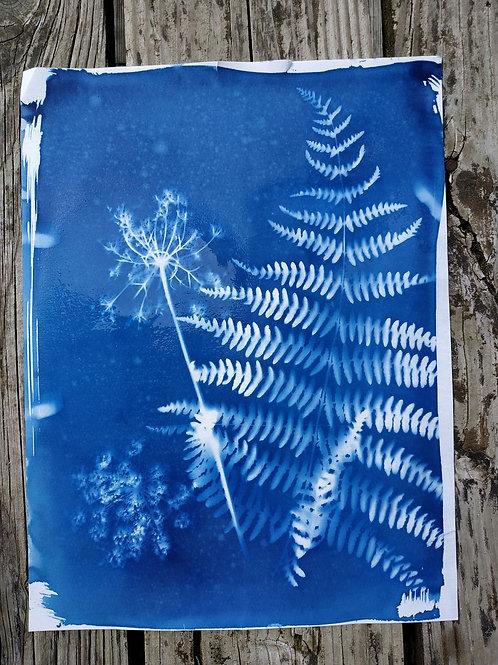 Atelier tout public au Lac des Sapins  - Cyanotype tirages photos monochrome