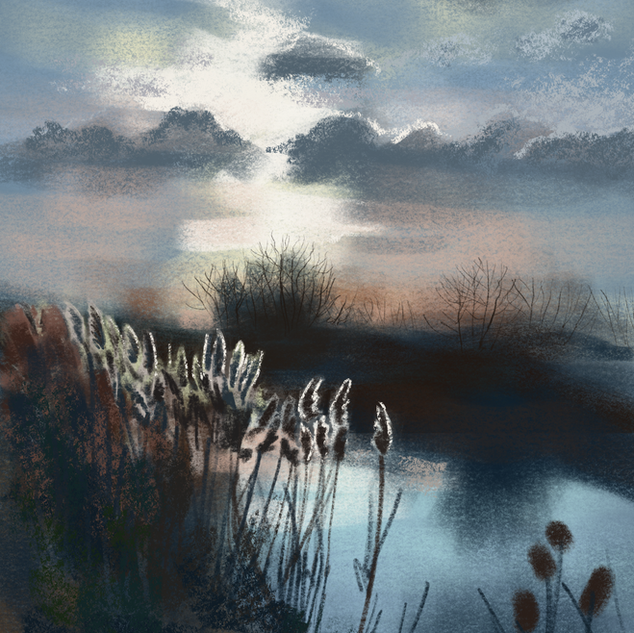 Reeds in the late afternoon