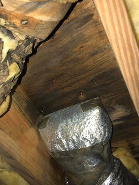 PRS Construction crawl space inspection - mold
