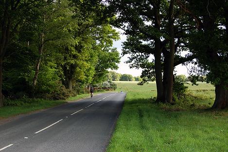 wild_cycles_road_23.jpg