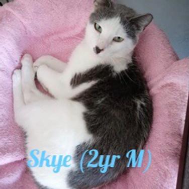 Skye Male 2yrs Grey & white