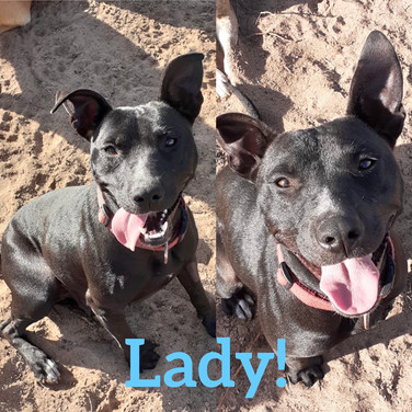Lady Staffy X lovable character!