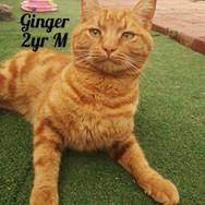 I am Ginger! 😻
