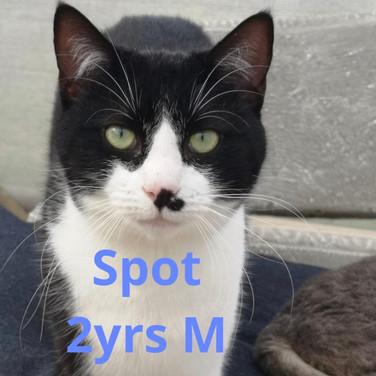Spot Black & White 2yrs Male