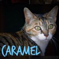 I am Caramel! 2yrs Calico / tabby