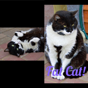 FatCat! 5yrs Black & white M