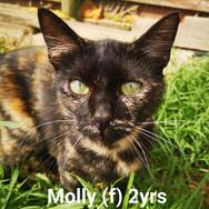 Molly (calico)