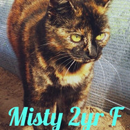 I am Misty! 😻
