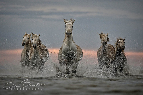 Freedom by Colin Brister.