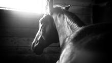Les 5 inévitables pour prendre soin du cheval