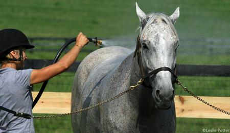 La gestion du cheval lors de temps chaud