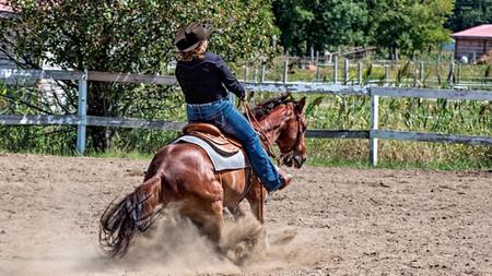 Les disciplines d'équitation western