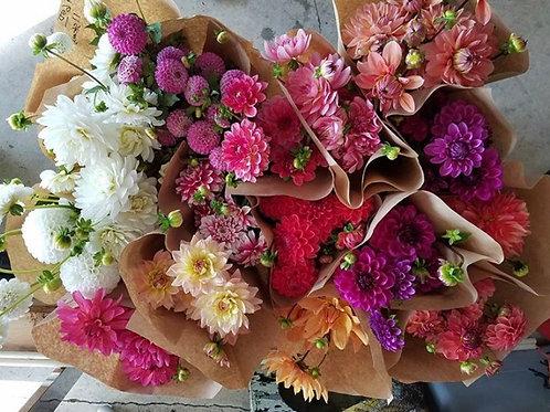 5stem-Dahlia Bunch Assorted Colors