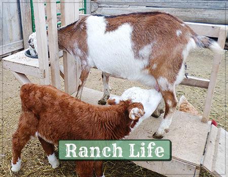 RanchLife.jpg
