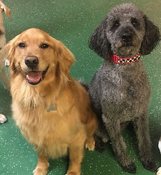 Daycare doggies_edited.jpg