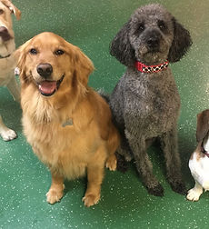 Daycare doggies.jpg