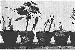 Oc_plants.jpg