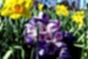 Raes amethyst small.jpg