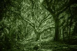 cool-wallpaper-forest-hawaii-38136 Kopie